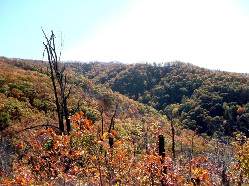 Buffalo Mountain, Johnson City, Tennessee. (1/6)