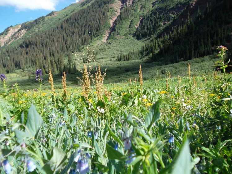 Maroon Bells Wilderness