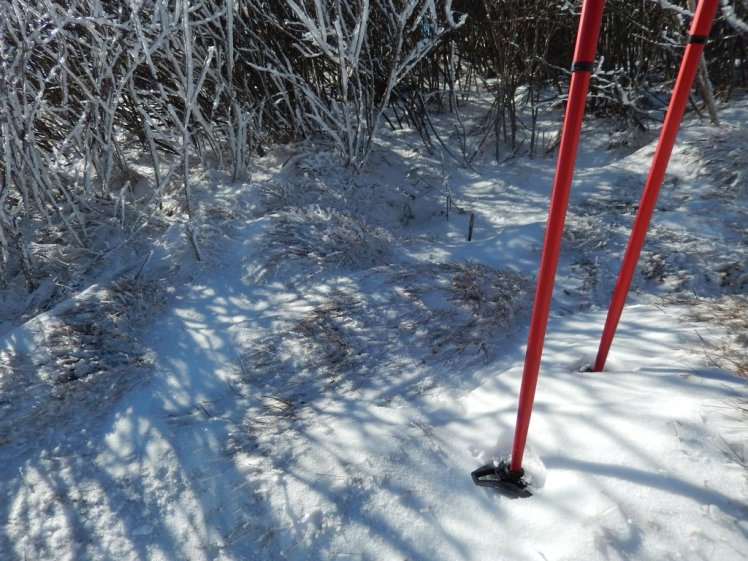 MSR Flight 3 Trekking Poles